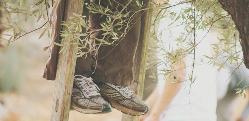 holy-land-trust-olive-harvest-image13.jpg
