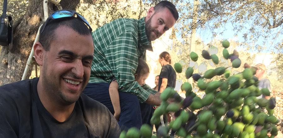 holy-land-trust-olive-harvest-image9.jpg
